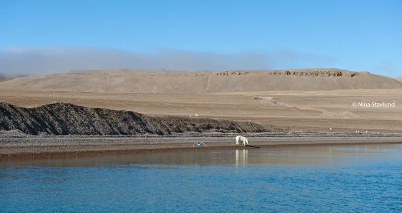 The Tundra..