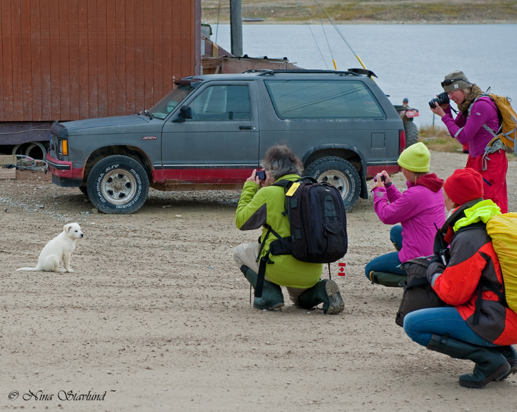 Photographing puppy ~ Cambridge Bay