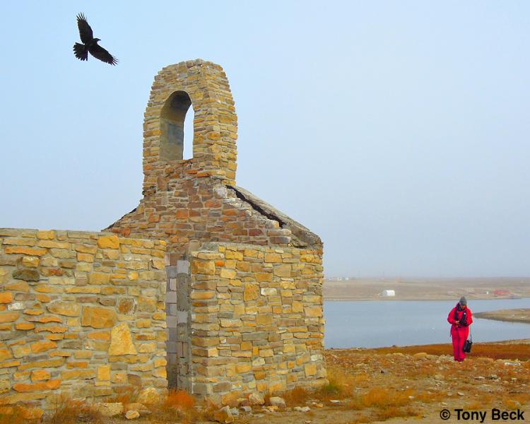 Northern Raven ~ Cambridge Bay