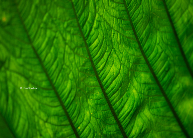 Leaf Up-close