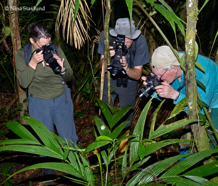 Photographing Red-legged Tree Frog