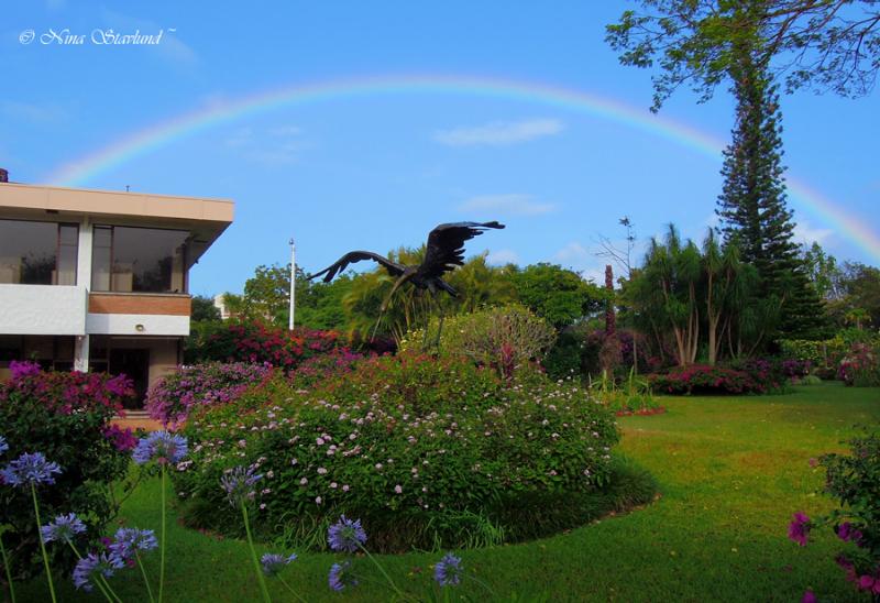 Garden at Hotel Bougainvillea
