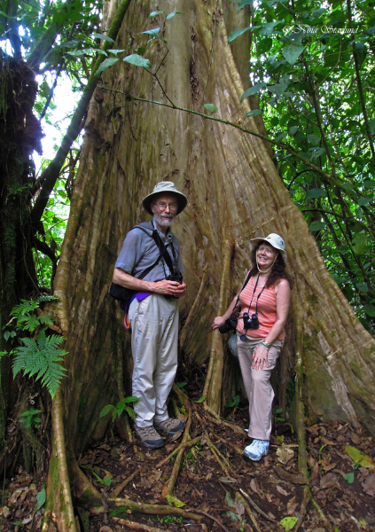 Happy people and BIG trees! La Selva Biological Station