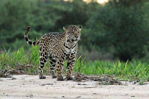 img_9_Jaguar4