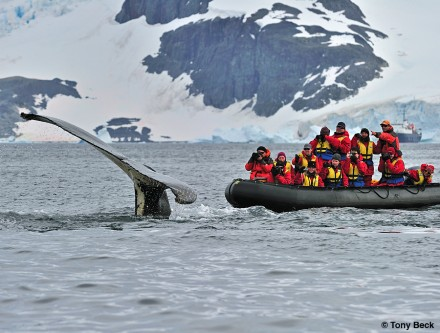 Humpback Whales from the Zodiac - be prepared to capture the excitement